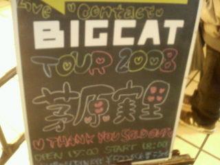Bigcat080209